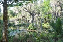 Crystal Springs, FL