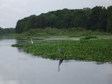 Lake Panasoffkee, FL